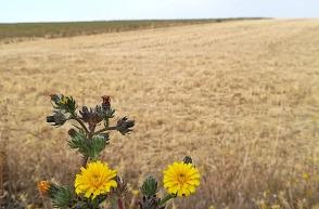 visualtraz gestion de cultivos